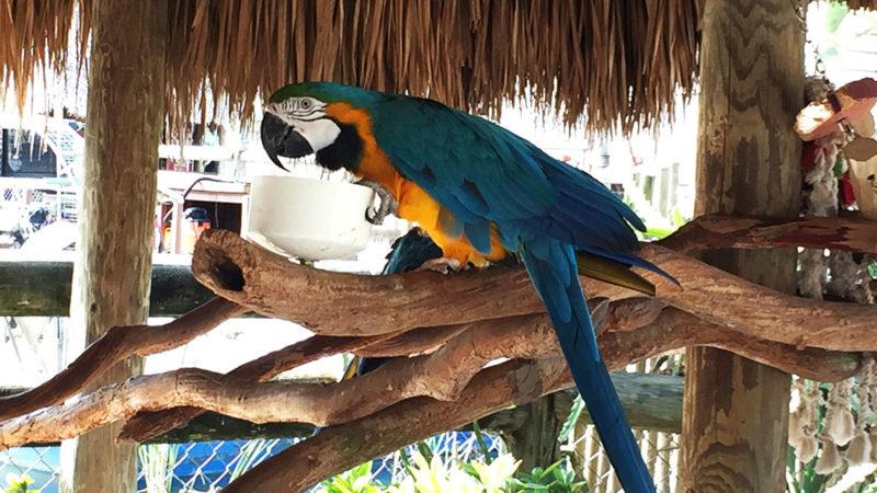 Everglades Alligator Farm Florida Miami - Papagei